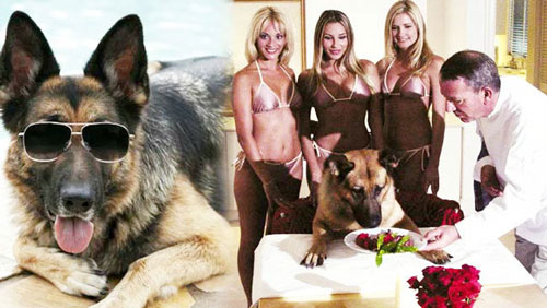 Gunther IV, the world's richest dog. Maybe.